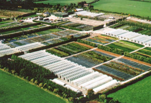 Business Profile – SAP Nurseries Require a Senior Sales and Business Development Executive in Tipperary