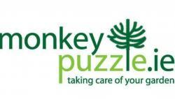 MonkeyPuzzle.ie