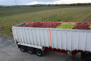 Business Profile – Mulrines Irish Orchards require an Orchard Supervisor to join their team.